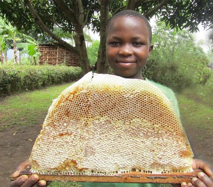An impressive honeycomb