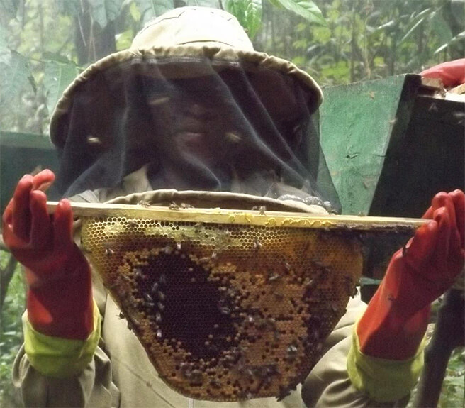 Handling the bees