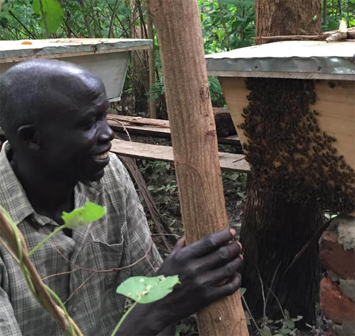Creating and maintaining the hives